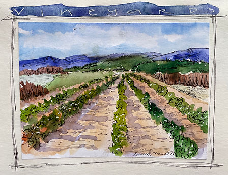 vineyard sketch.jpeg