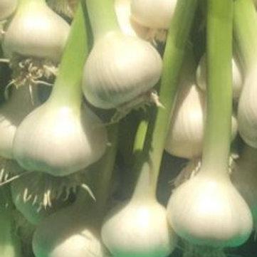 Fresh Garlic (head)