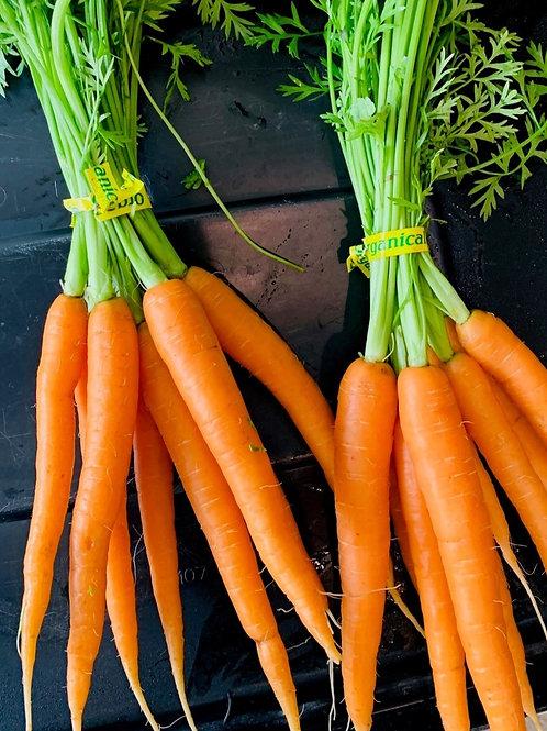 Carrots (bunch)