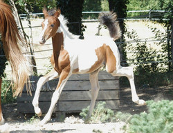 Cazee+1+à+cheval.jpg