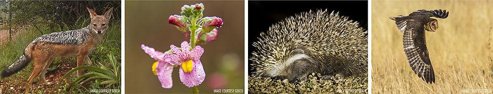 Kyalami Fauna and Flora