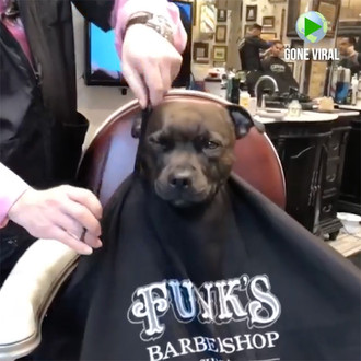 Watch: Funny Dog Loves Being Barbered