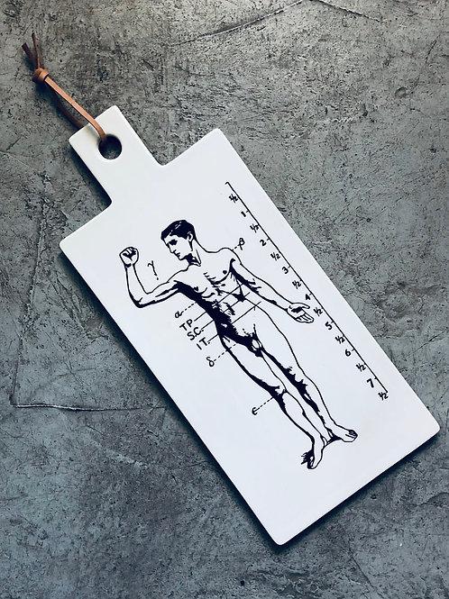 Tabla anatomia