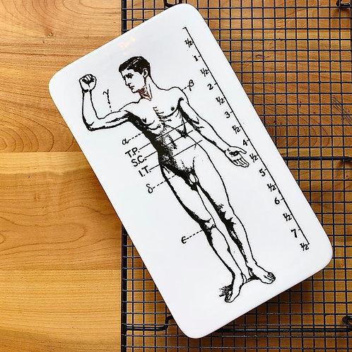 Tabla anatomía