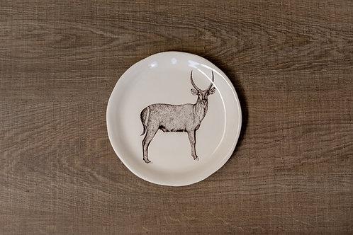 Plato antilope