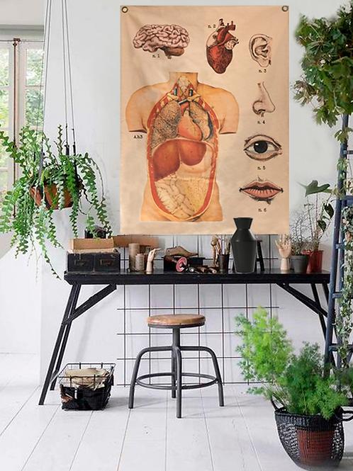 Wall chart lona Anatomia