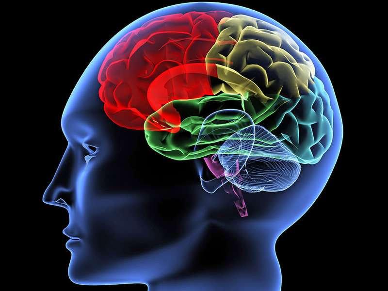 Brain-illustration.jpg
