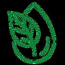 leaf_edited_edited.png