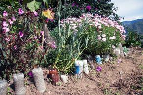 Pollinators are Important in Coffee Farms