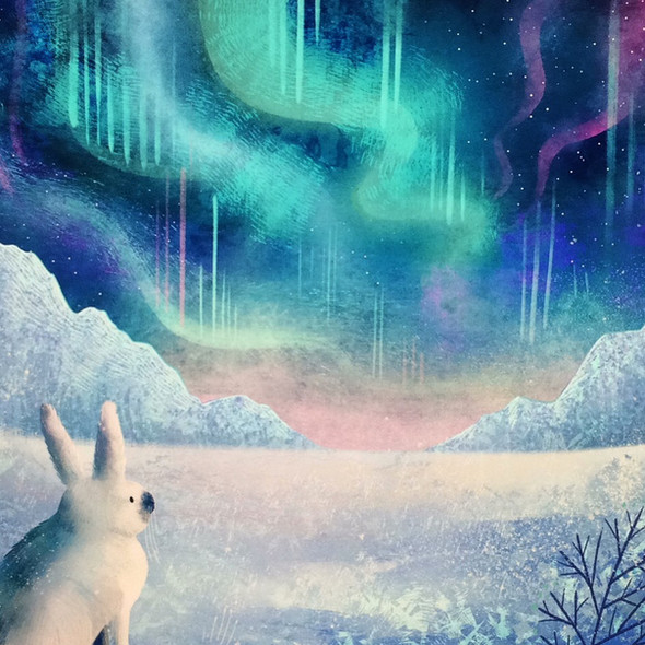 Arctic Hare Northern Lights