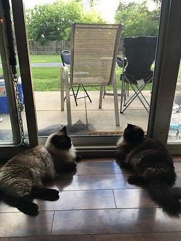Cats at Screen.JPG