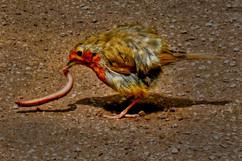 THE EARLY BIRD.jpg