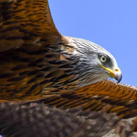 Bird's eye view.jpeg