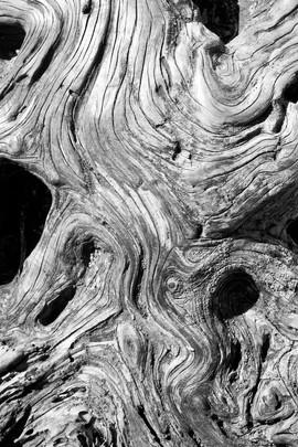 Woodgrain.jpeg