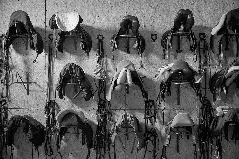Saddles_edited.jpg