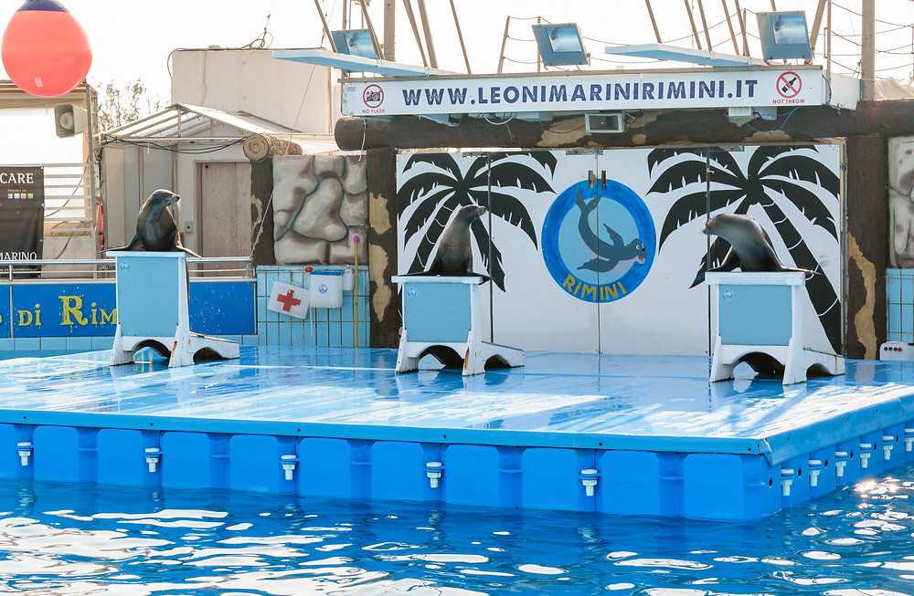 Sea lions show at Acquario di Rimini