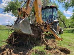 stump removal in Tucson.jpg