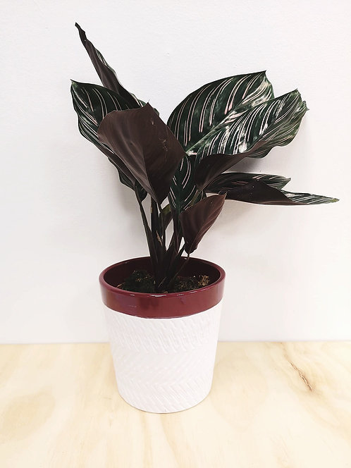 White and Red Patterned Pot