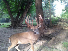 We love big antlers, and making the best deer lure on the market.
