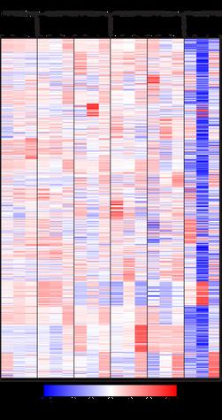 Intestinal phage metagenomics