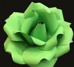 Neon Green bloom