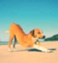 1213-dog-resolutions-downward-dog-m_edit