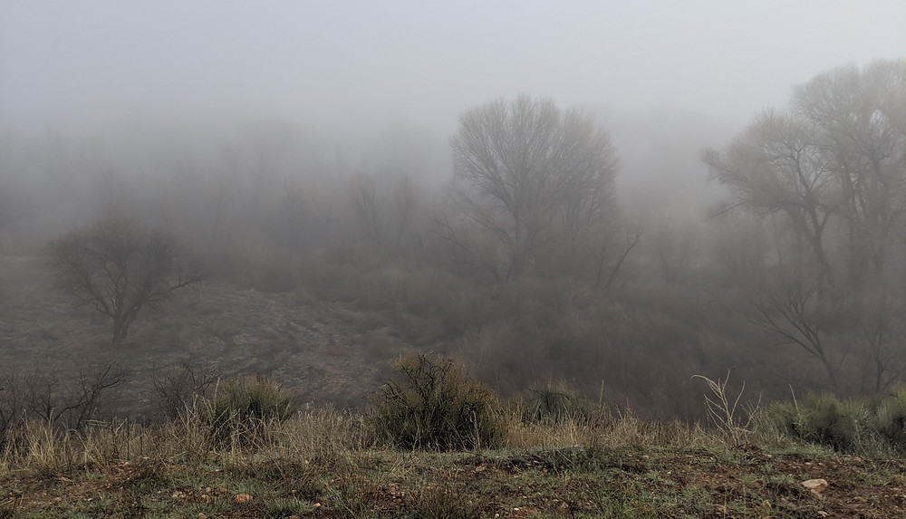 Trees lining the Verde River emerge from a thick blanket of fog.