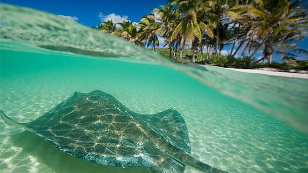 Isla Contoy.jpg