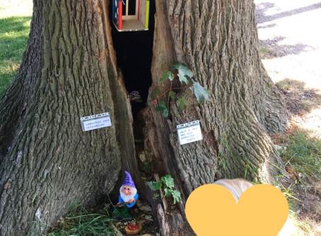 In het Weijerpark is er tegenwoordig een kabouterboom te vinden🤩