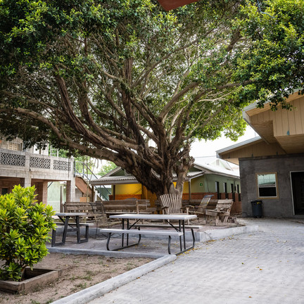 Big Heart Orphanage - There is hope for a tree.