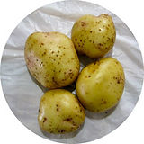 YukonGold-potatoes-202.jpg