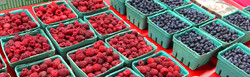 fruit-IMG_4065-New