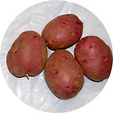 RhineRed-potatoes-202.jpg