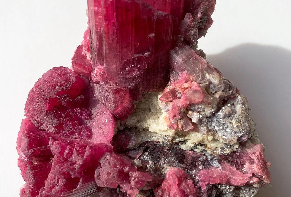 Turmalin Var. Rubellit – Jonas Mine, Minas Gerais, Brasilien