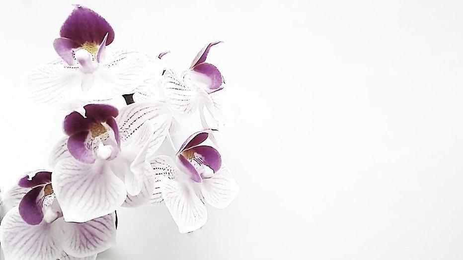 En orkidé med lila och vita blad syns mot en vit bakgrund