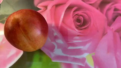 En nektarin flyger mot en bakgrund med rosor.
