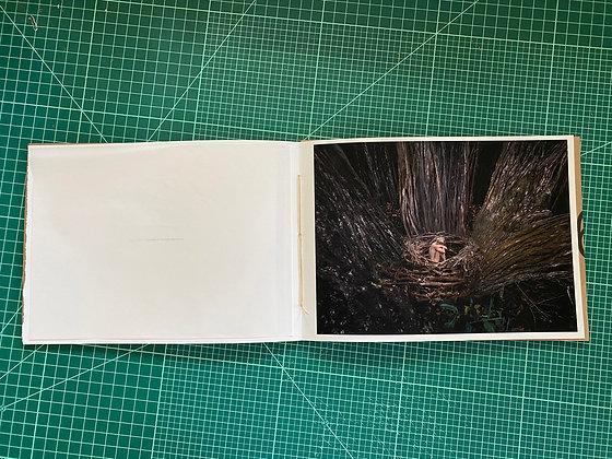 0925.1617 Hamäkuä Forest Signature Print