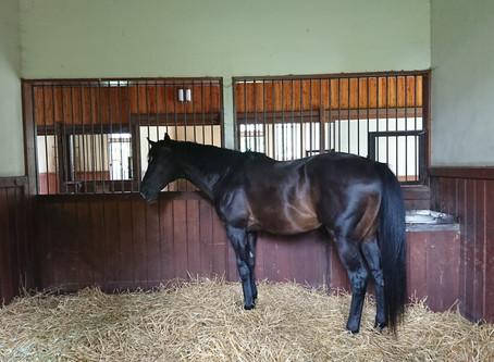 ダノンシャンティの種牡馬引退