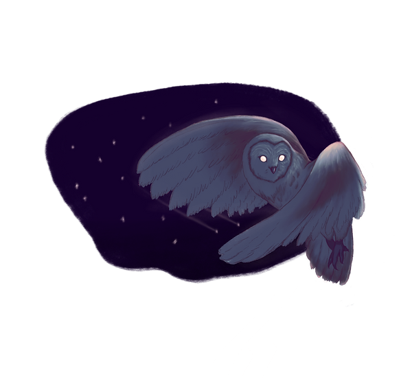 5. Owl blue.png