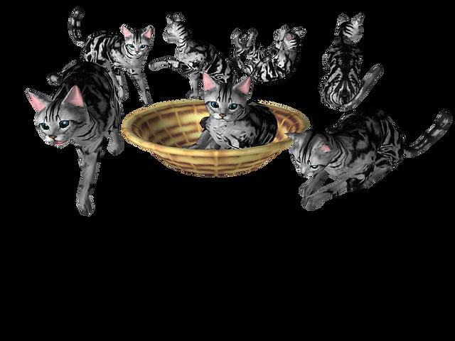 猫アプリベンガル猫
