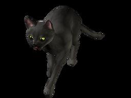猫アプリ黒猫