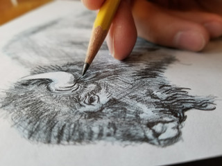 Buffalo Drawing.jpg