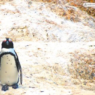 pinguino3.jpg