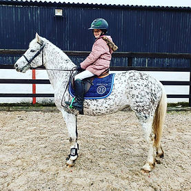 Yggdrasil Freyja Knabstrupper Pony Mare.