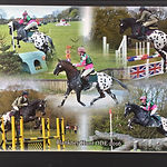 Rollestone Kharma Knabstrupper Stallion UK