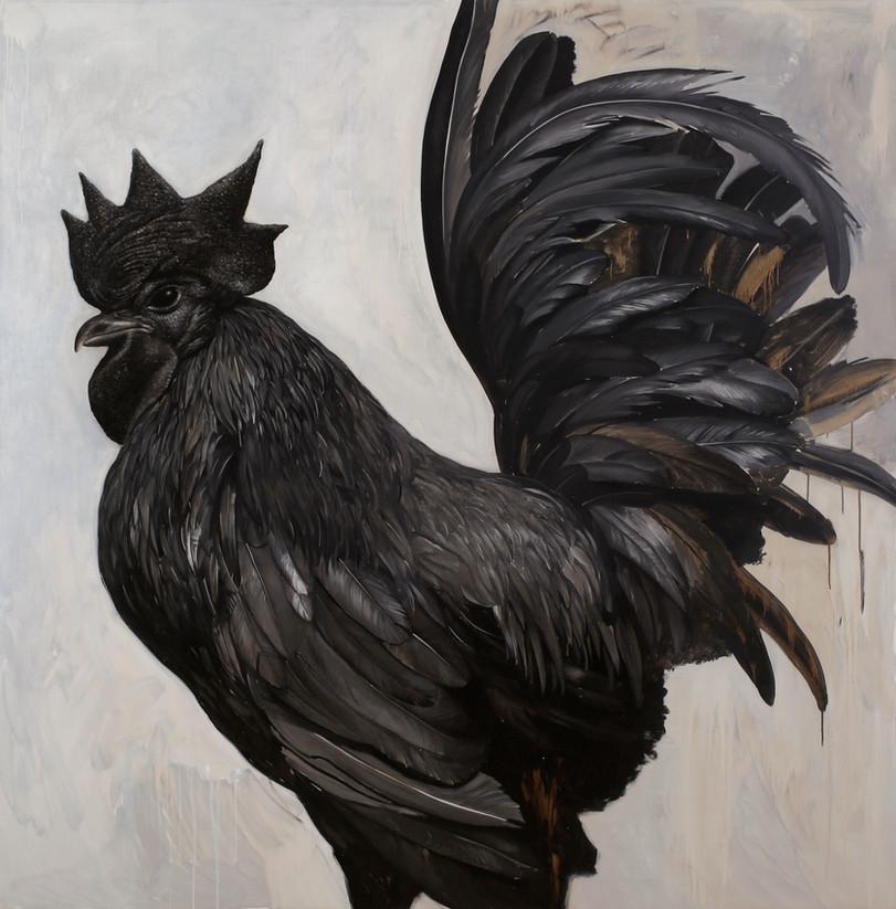 Black Cockrel
