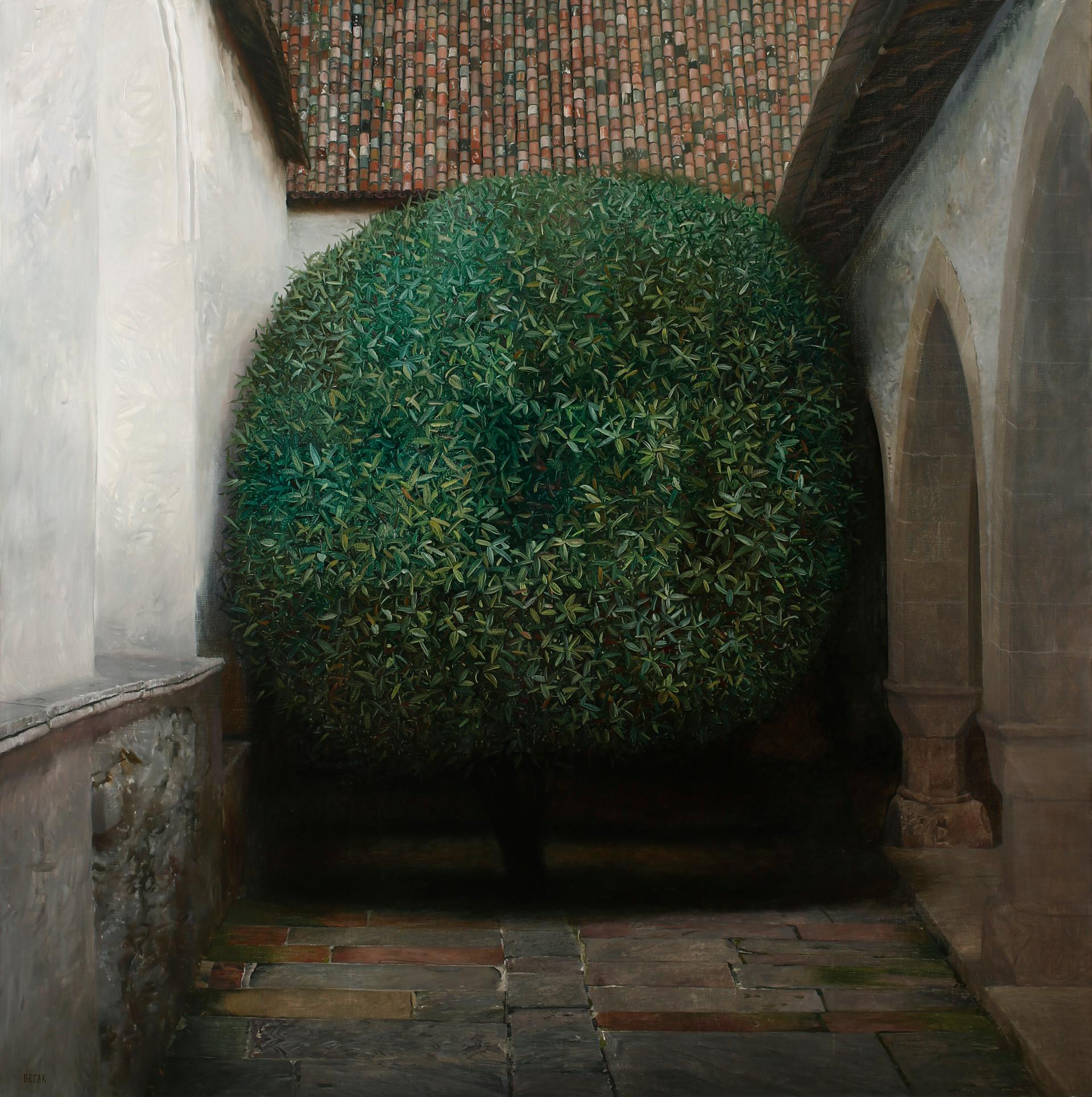 Tree between walls