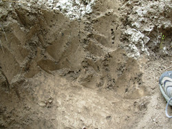 Layers of Dirt