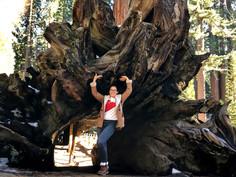 Grands arbres et belle rencontre