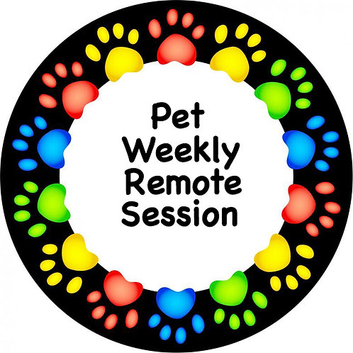 Pet Individual Remote Monthly Session